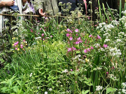 Planting from Salix: An Environmentally Responsible Garden