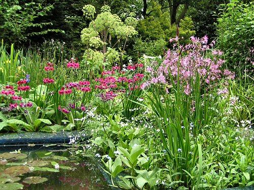The RSPB/SITA Real Rubbish Garden: Pond-side Planting