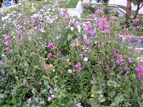 The Trailfinders Recycled Garden: Native Planting