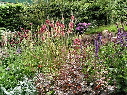 Wildlife Trusts LUSH Garden: Cottage Garden