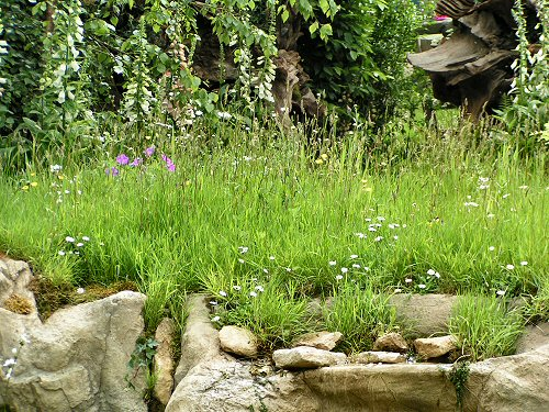 Wildlife Trusts LUSH Garden: Native Meadow Planting
