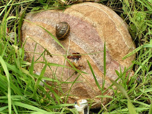 Wildlife Trusts LUSH Garden: Thrushes Anvil