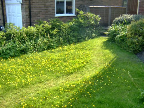 Path through the 'meadow' on 31st May