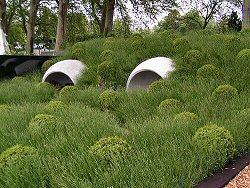 Hanover Quay Garden