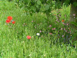 Chelsea Pensioners Garden: native planting