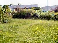 My meadow