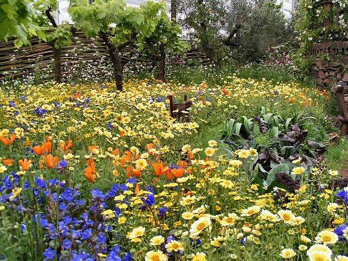 The Fetzer Wine Garden: Drift Planting