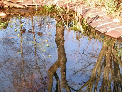 Sky reflected in a garden pond